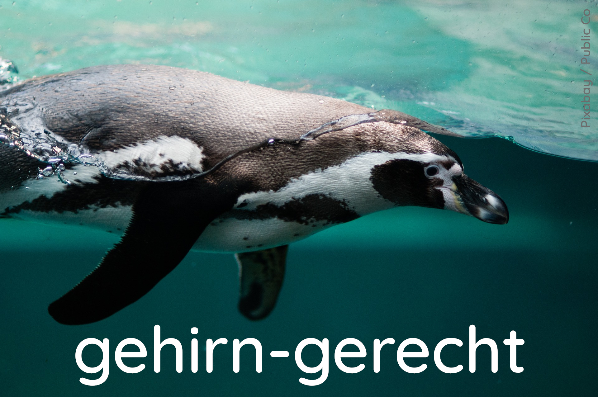Pinguin Element gehirn-gerecht Quelle